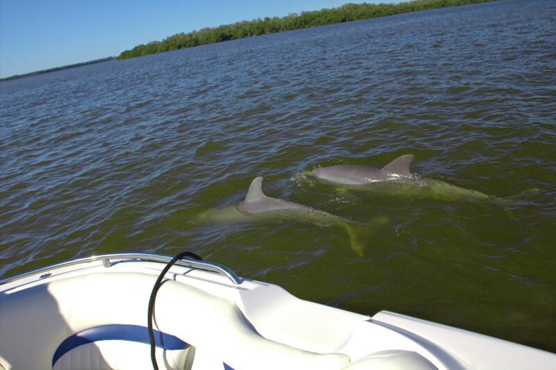 Delphine auf Bootstour von Cape Coral nach Cabbage Key